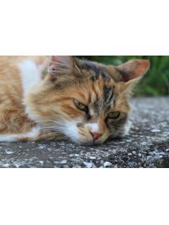 猫と神社とお寺のブログ