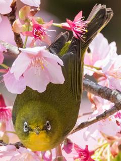 ニコ生で現像した写真とか鳥の写真とか