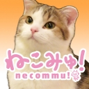 人気の猫動画 56,337本 -ねこみゅ!