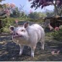必死に耐える豚