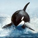 キーワードで動画検索 Alliance of Valiant Arms - ORCA Brigade