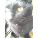 俺の黒猫ミュニティ