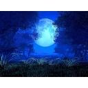 月と眠ろう