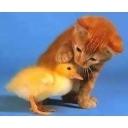SunSun Nansan と 猫のハナクロ君