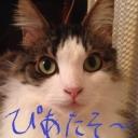 平しょ(ヒラショ)のきまぐれ配信
