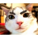 ツンギレ猫リク君シリーズ