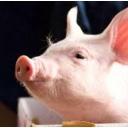 豚肉的な歌的な