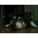 キーワードで動画検索 ジャック・オー - さくら(犬)のまったりゲーム配信