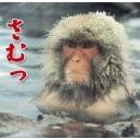 うっきうっきにしてやんよ!!(꒪ꈊ꒪๑)*.♪。★*・゜・*♪*.♪。★*・゜・
