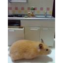 小動物 【mini  animal】