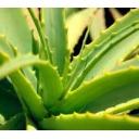 雑草の雑草による雑草のためのコミュ