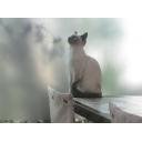 人気の「NEGI」動画 145本 -マスターズプロジェクト