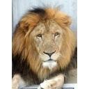 ライオンズアパート