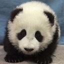パンダの日常