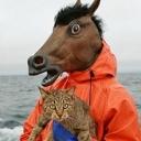 猫好キッドの猫の王国。