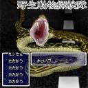 キーワードで動画検索 粘菌 - 野生動物探検隊【やどけん!】