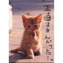 人気の「らき☆すた 06」動画 116本 -深夜のゲーム放送