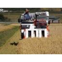 【初見歓迎】ツルハ放送