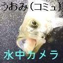 【水中カメラ配信】水の中から釣り気分