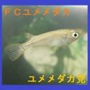 FCユメメダカ