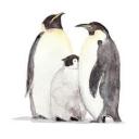 ペンギンと僕。
