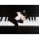 ぼっちの隠れたピアノ部屋