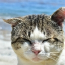 *蛍*LIFE=MUSIC+CAT*