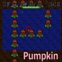 pumpkin畑