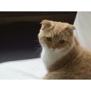猫カフェ(その他 動物系カフェ)