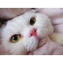 Mon chat mignon. ぬこの放送(。・ω・。)ー基本的にかゎぃぃ。