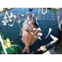 生板のうえの鯛