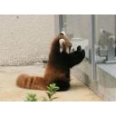 熊猫カフェ