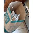 フリールーム 霞猫―sianeko―