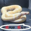 Video search by keyword AV(アニマルビデオ) - Snake PUB「蛇ruma」