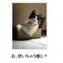 キーワードで動画検索 篠崎愛 - 大田区