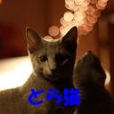どら猫放送