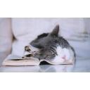 ♡✿♥✿♥✿猫Catloveコミュ✿♥
