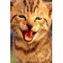 ネコが好きな叶によるネコの為の(?)会
