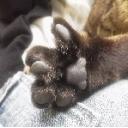 猫不在な猫カフェ★暇にゃん