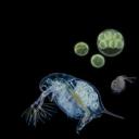 いつルト(歌ってる微生物&曲作ってる微生物)のシャーレ