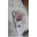 JAM猫と7匹の猫様~愛をこめて(´ε` )~