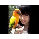鳥アイドルさんになりたい