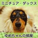 ミニチュア・ダックスのゆめちゃんとらいむちゃん放送中