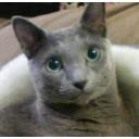 猫カフェ ~blue~