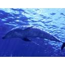 イルカになりたい