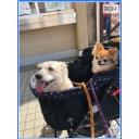 キーワードで動画検索 クロス - フォロワー様と仲間由紀恵様と当方の集会所\(o⌒∇⌒o)/