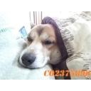人気の「動物」動画 165,714本 -愛犬「GEN510」の気ままらいぶ