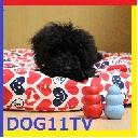 Dog11TV