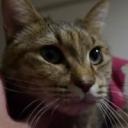 【活動終了】ぽち(と猫)とクロスケの雑談ゲーム配信っぽい何か