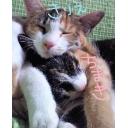 【初見歓迎】三毛猫カフェ【猫好きいらっしゃい】